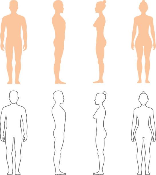 illustrazioni stock, clip art, cartoni animati e icone di tendenza di sagome vettoriali umane maschili e femminili - il corpo umano