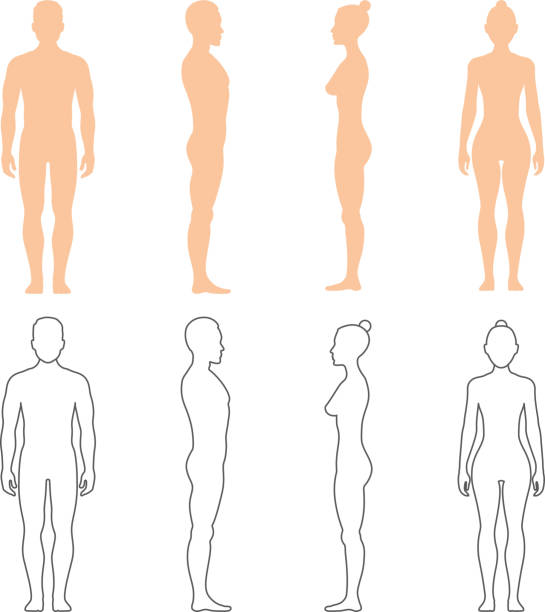 Male and female human vector silhouettes Male and female human vector silhouettes. Man and woman bodies illustration human representation stock illustrations