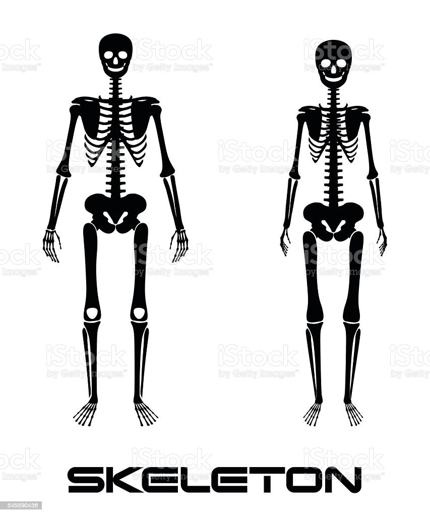 Male and female skeleton - vector silhouettes vector art illustration