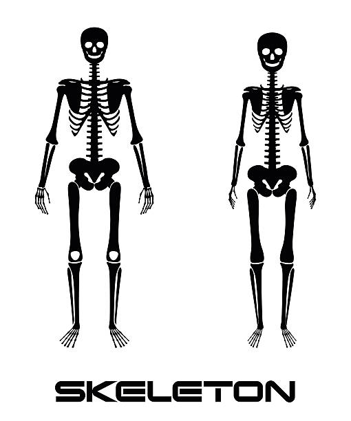 Royalty Free Humerus Clip Art, Vector Images