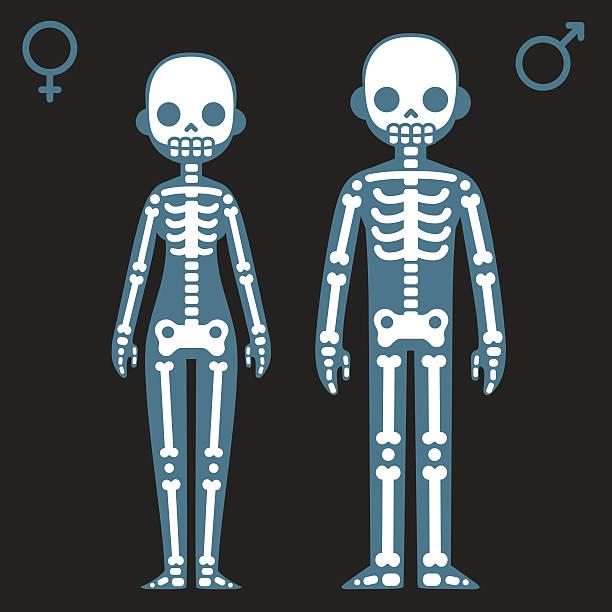 Male and female skeletons Stylized cartoon male and female skeletons with corresponding gender symbols. x ray image stock illustrations