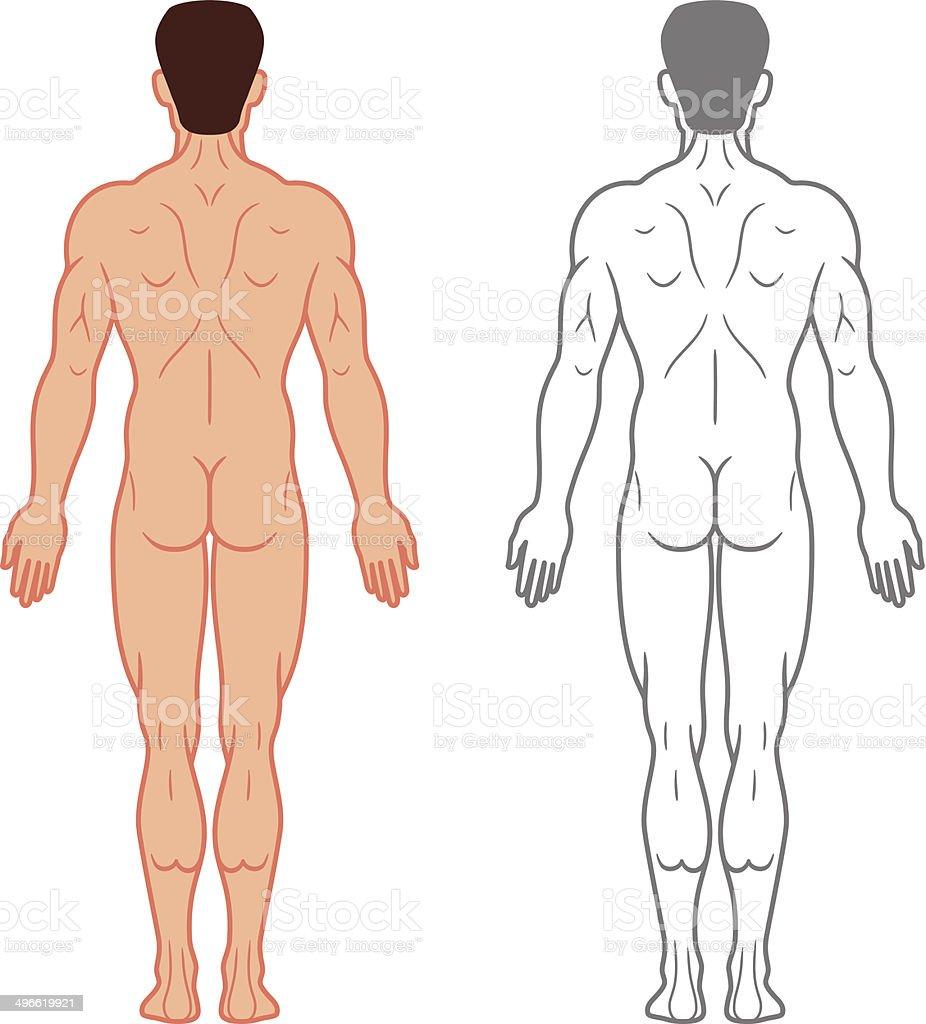 Ilustración de Masculino Vista Posterior De Cuerpo y más banco de ...