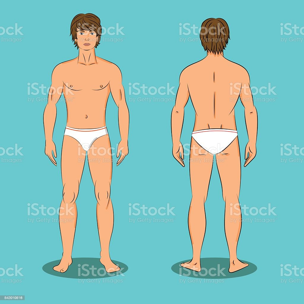 male body front and back naked stock vector art & more images of