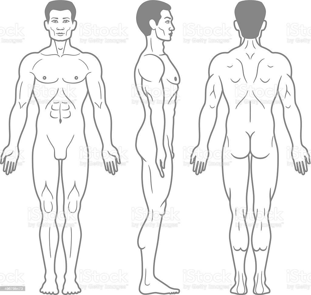 Ilustración de Cuerpo Macho Frontal Lateral Y Trasera Vista y más ...