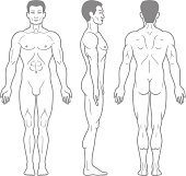 Male Body Front, Side and Back View