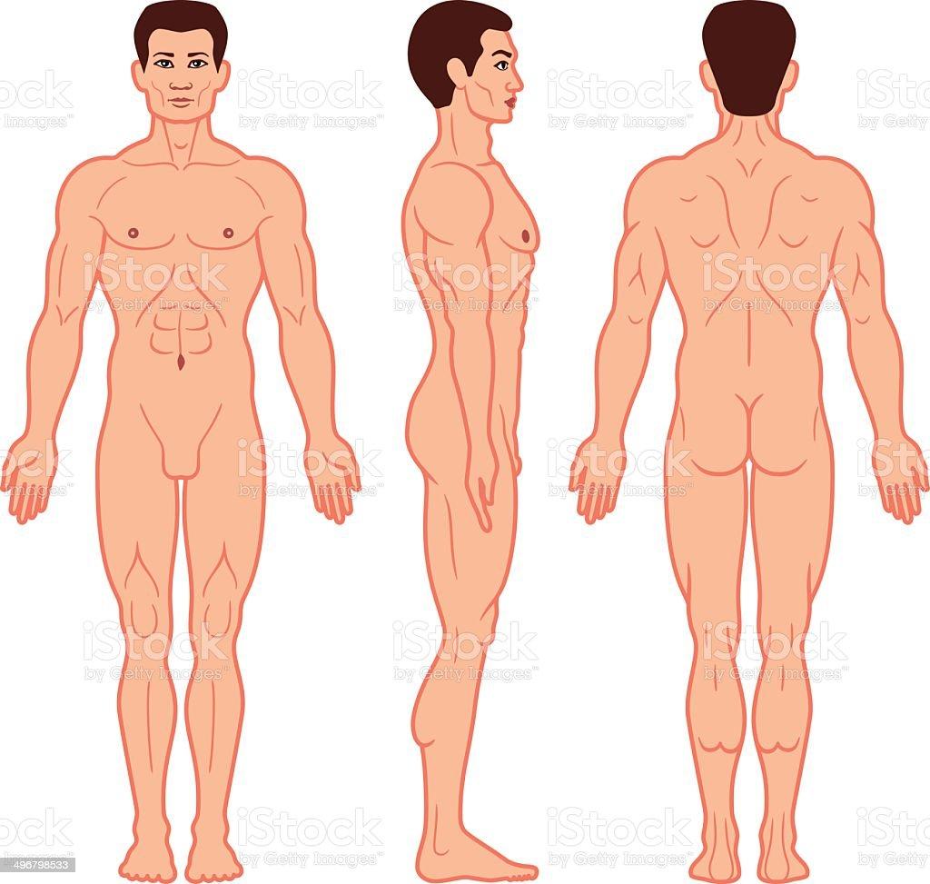 männliche und weibliche seite im körper