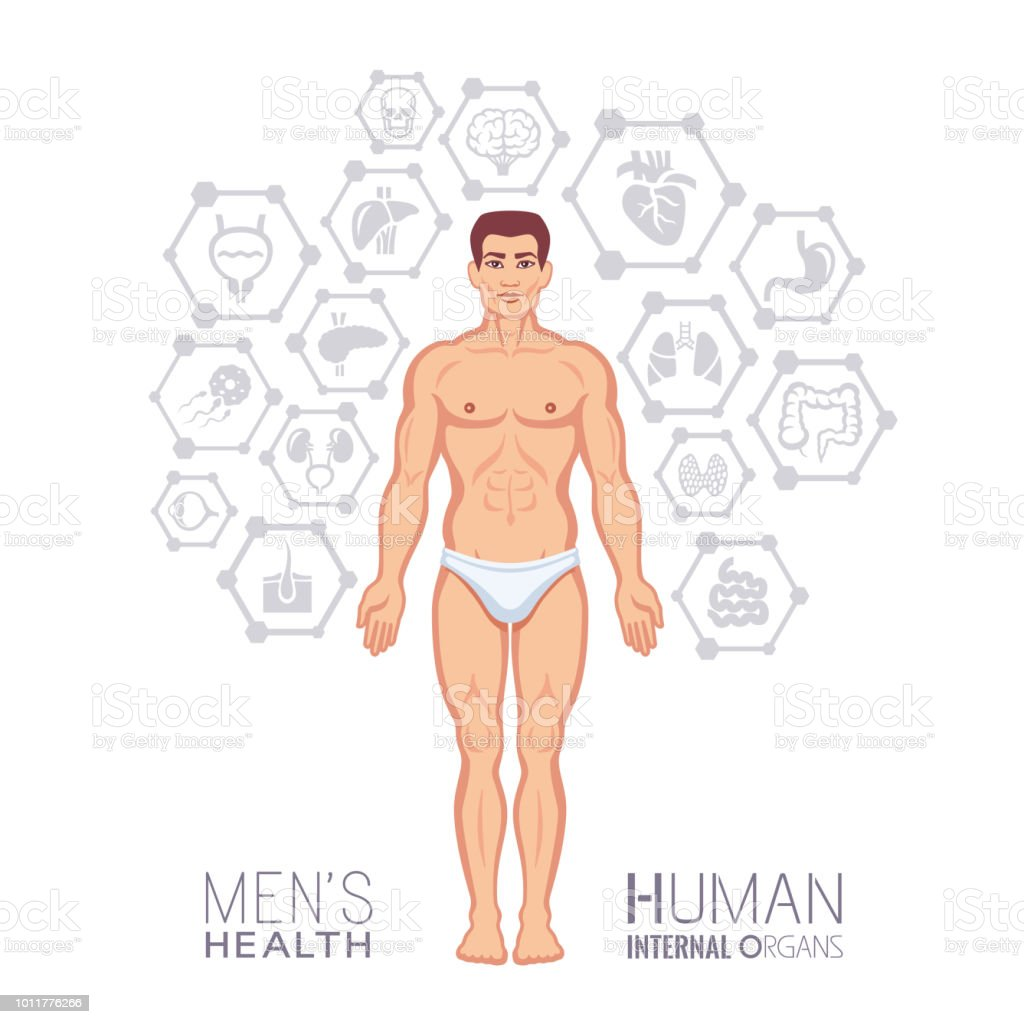 Male Body Human Internal Organ Icons Stock Vector Art & More Images ...