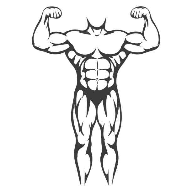 Male body muscle black silhouette Male body muscle black silhouette isolated on white background. Vector illustration chest torso stock illustrations