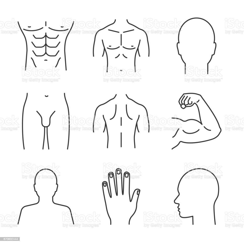 Männliche Körperteile Symbole Stock Vektor Art und mehr Bilder von ...