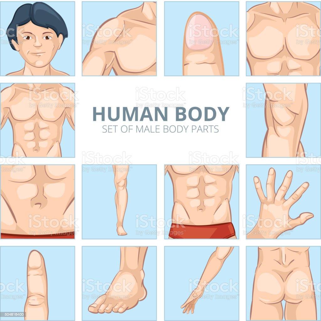 Vetores De Masculino Partes Do Corpo Em Estilo De Desenho Conjunto
