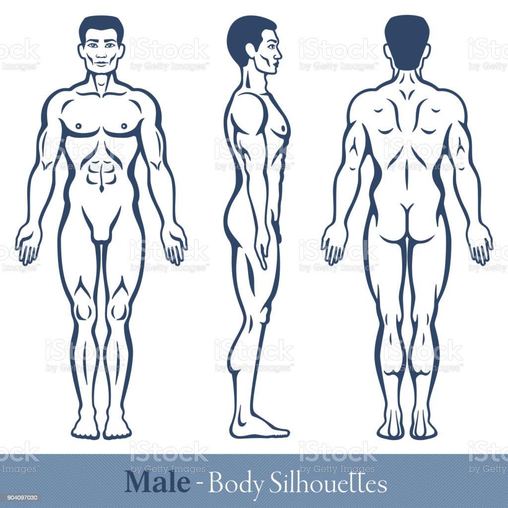 Male Body Silhouettes vector art illustration