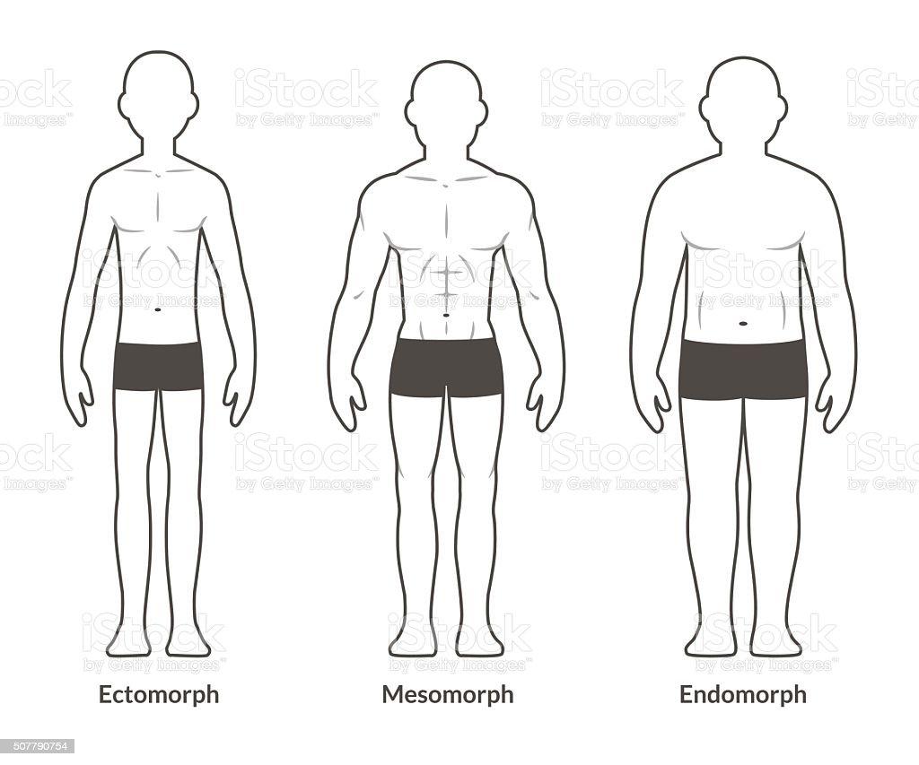 Männliche Körper Tabelle Stock Vektor Art und mehr Bilder von ...