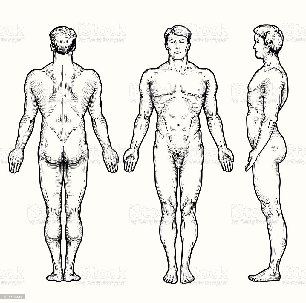 Male Body Stock Vector Art More Images Of Anatomy 527745317 Istock