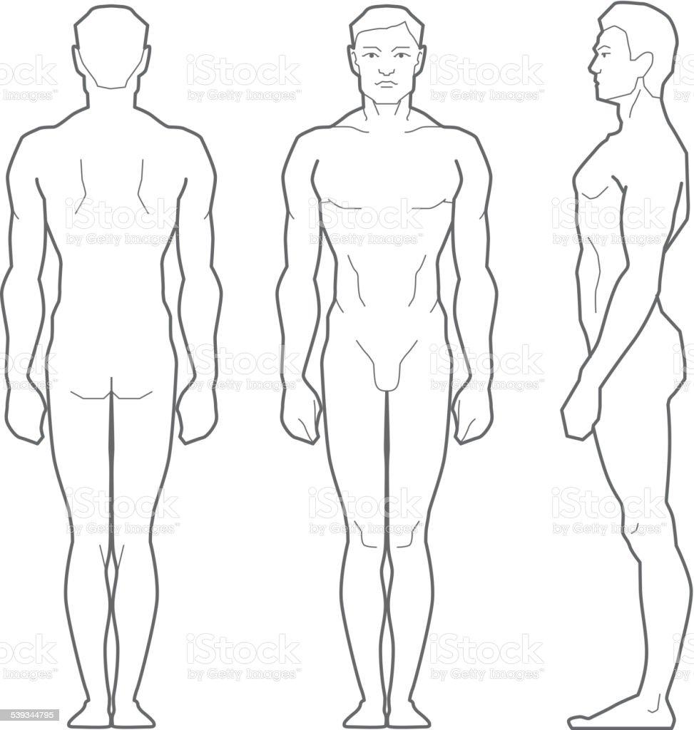 Männliche Körper Stock Vektor Art und mehr Bilder von Anatomie ...