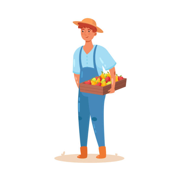 Male farmer holding a wooden box with a crop of fruits. Vector illustration in flat cartoon style. The male farmer in blue uniform and hat holding a wooden box with a crop of apples and pears. Concept of gardening character. Isolated vector icon illustration on white background in cartoon style. crucifers stock illustrations