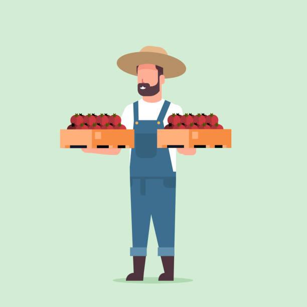 ilustrações de stock, clip art, desenhos animados e ícones de male farmer holding boxes with red ripe tomatoes man harvesting vegetables agricultural worker eco farming concept flat full length - picking fruit