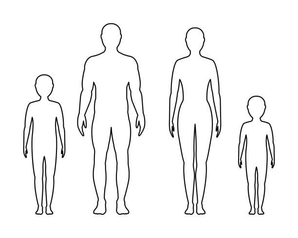 illustrazioni stock, clip art, cartoni animati e icone di tendenza di contorno maschile, femminile e bambino su sfondo bianco, vettore. famiglia. - il corpo umano