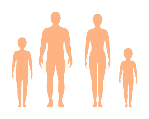 illustrazioni stock, clip art, cartoni animati e icone di tendenza di silhouette maschile, femminile e per bambini su sfondo bianco, vettore. - il corpo umano