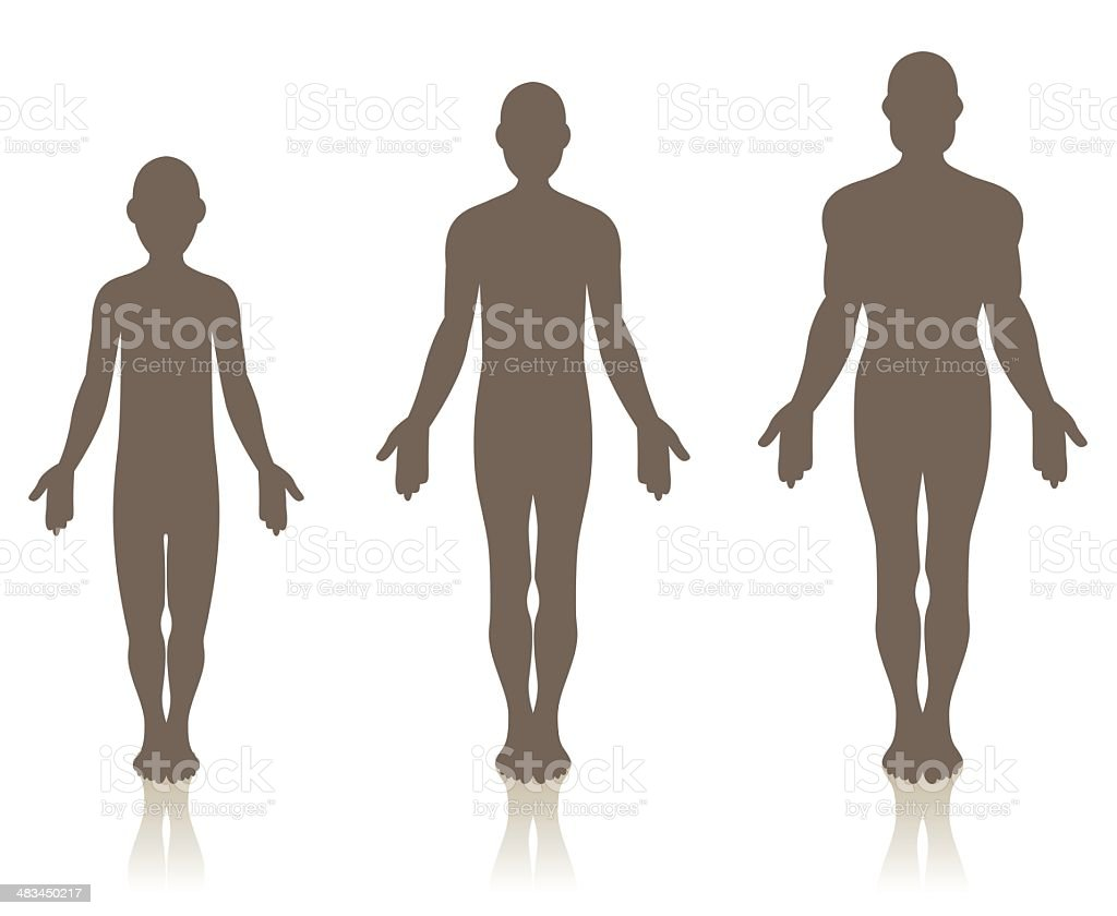 Male Growth royalty-free stock vector art