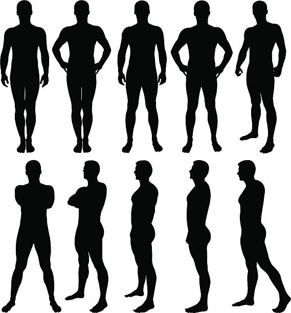 Male silhouettes posing Vector illustration of male silhouettes posing. the human body stock illustrations