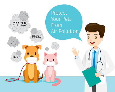 masque anti pollution chat