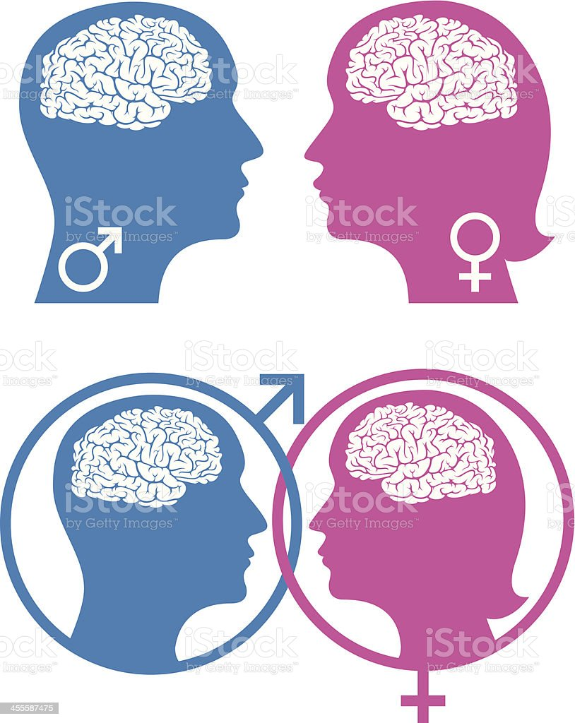Male Vs Female Brain Stock Vector Art  More Images Of Adult 455587475  Istock-7323