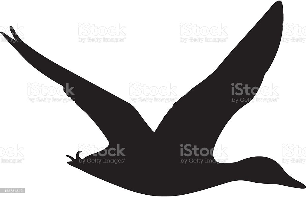 Mallard Duck Flying Silhouette royalty-free stock vector art