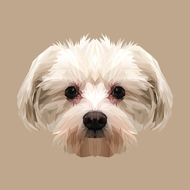 Top Maltese Clip Art, Vector Graphics and Illustrations ...