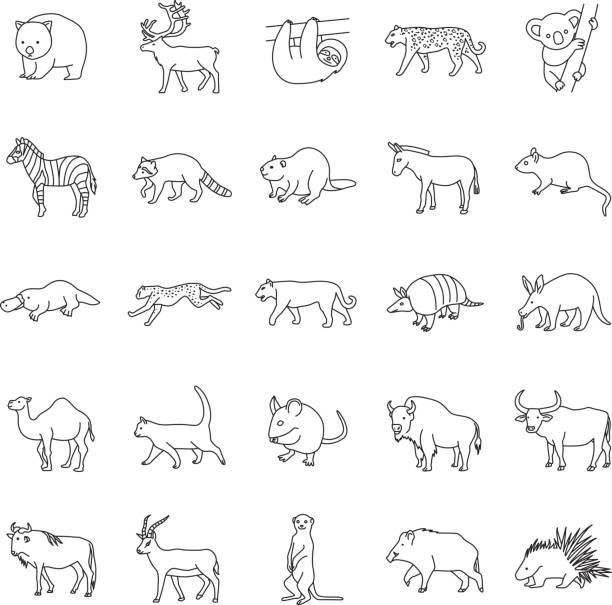 bildbanksillustrationer, clip art samt tecknat material och ikoner med däggdjur ii konturer vektor ikoner - platypus
