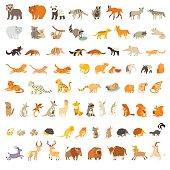 Mammals of the world. Extra big animals set