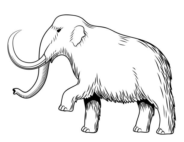 108 Elephant Side View Drawing Illustrations Royalty Free Vector Graphics Clip Art Istock