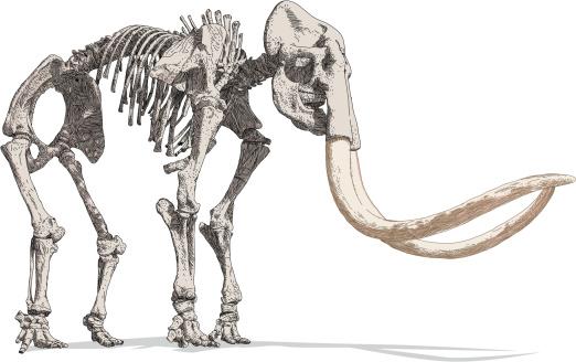 Mammoth esqueleto