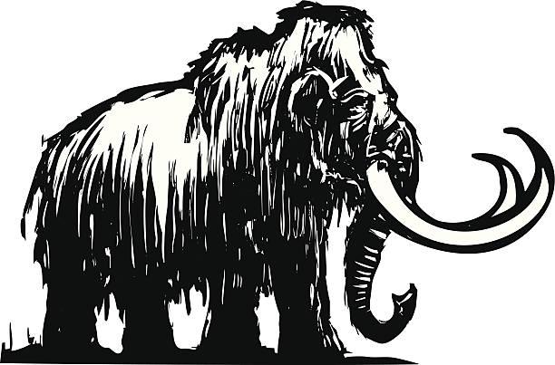 mammoth - eiszeit stock-grafiken, -clipart, -cartoons und -symbole