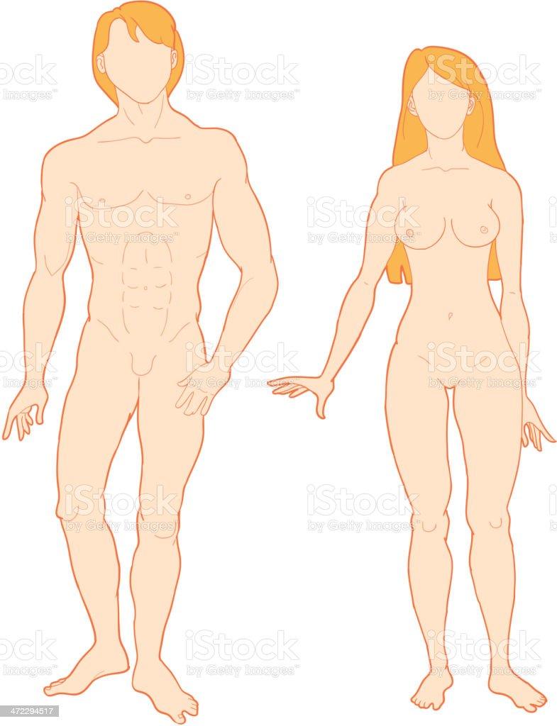 Mann Und Frau Körper Stock Vektor Art und mehr Bilder von Anatomie ...
