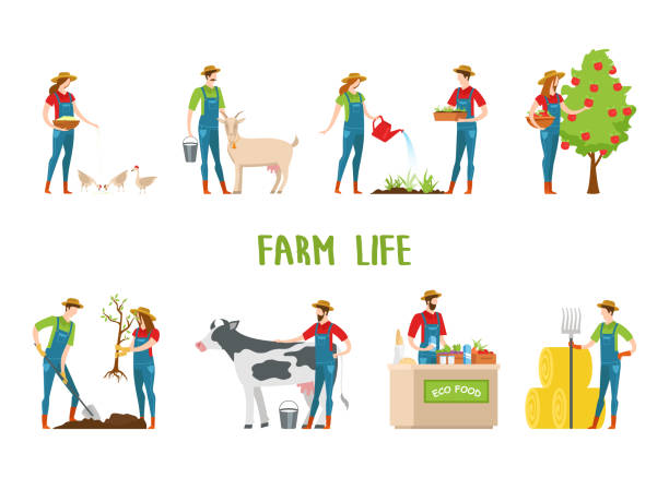 Man and woman doing farm work, gardening. Set of isolated agriculture farmers. Man and woman gardeners feeding chickens and goat, harvesting apple tree and gardening, selling eco food and collecting hay. Village animals and countryside farmer stock illustrations