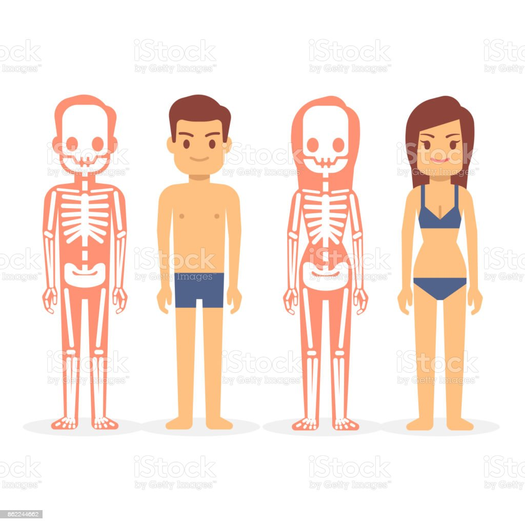 Mann Und Frau Männliche Und Weibliche Skelette Isoliert Auf Weißem ...