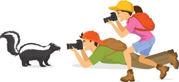 mann und frau touristische reisende fotografen fotografieren von skunk tiere, isolierten vector illustration - tierfotografie stock-grafiken, -clipart, -cartoons und -symbole