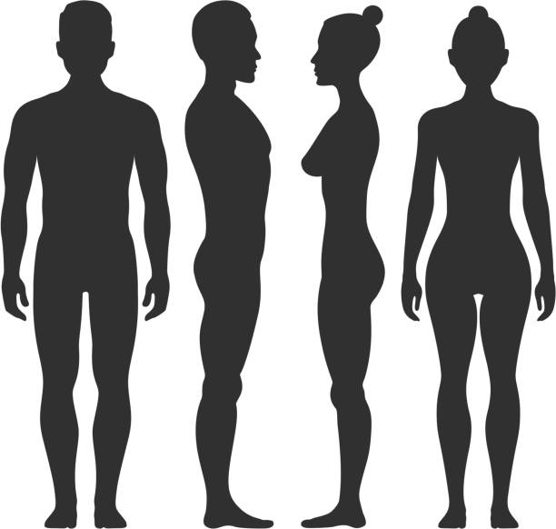 Man and woman vector silhouettes in front side view Man and woman vector silhouettes in front and side view. Illustration of body male and female illustration female likeness stock illustrations