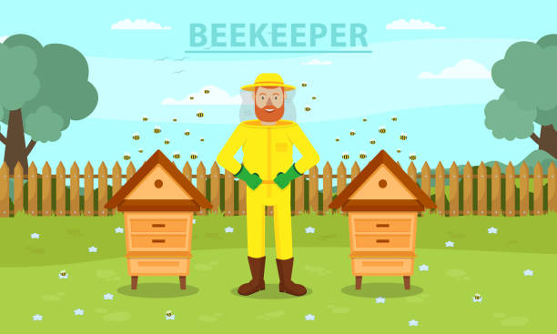 Man Beekeeper Between Two Hive. Breed Bees. Vector Man Beekeeper in Yellow Protective Suit Between Two Hive. Beemaster at Spiary. Breed Bees. Bees Flying near Hive. Apiarian Costume. Apiary on Background Forest. Vector Illustration. Hobby Beekeeping. beekeeper stock illustrations