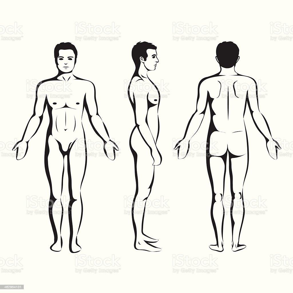 Ilustración de Hombre Anatomía Cuerpo Frontal Lateral Y Trasera y ...