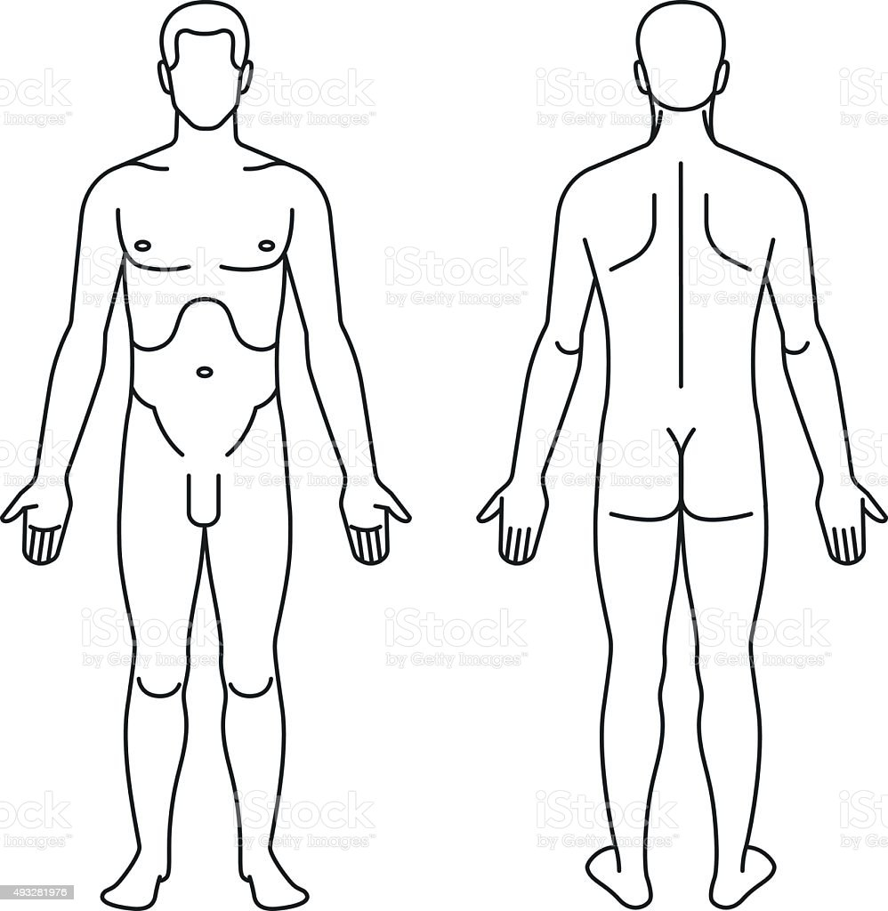 Man Body As Anatomical Guide Stock Vector Art More Images Of
