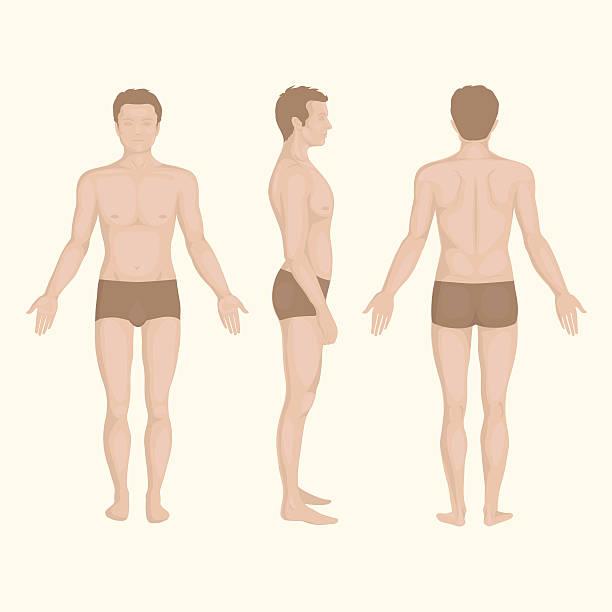 ilustrações de stock, clip art, desenhos animados e ícones de homem corpo, para a frente, trás, lado a pose de humano - tronco nu