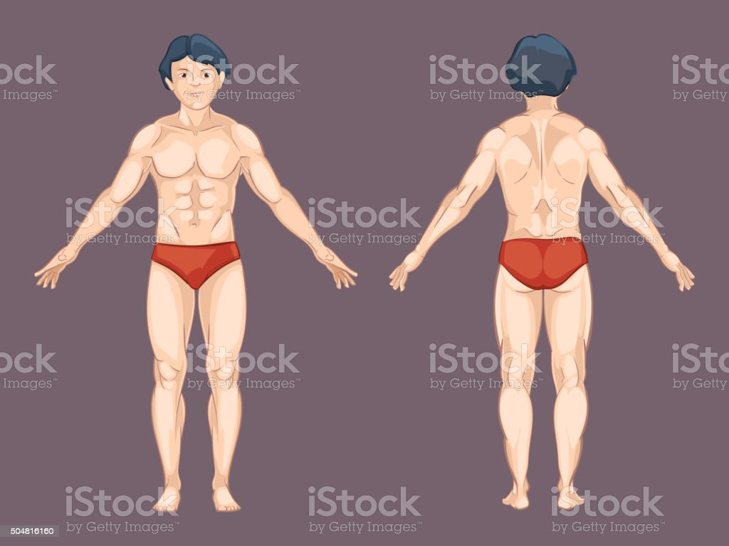 Ilustración de Hombre Cuerpo En La Parte Delantera Y Trasera ...