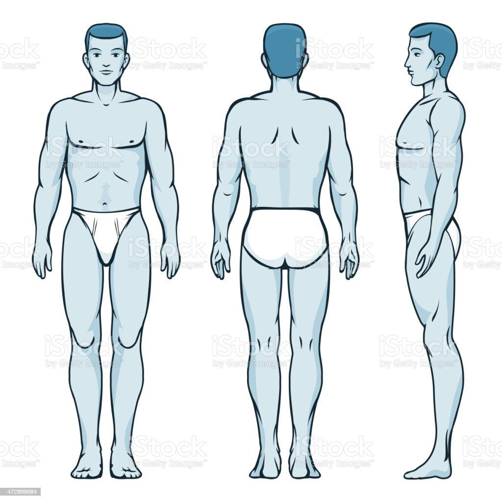 Ilustración de Hombre Cuerpo Modelo Frontal Lateral Y Trasera ...