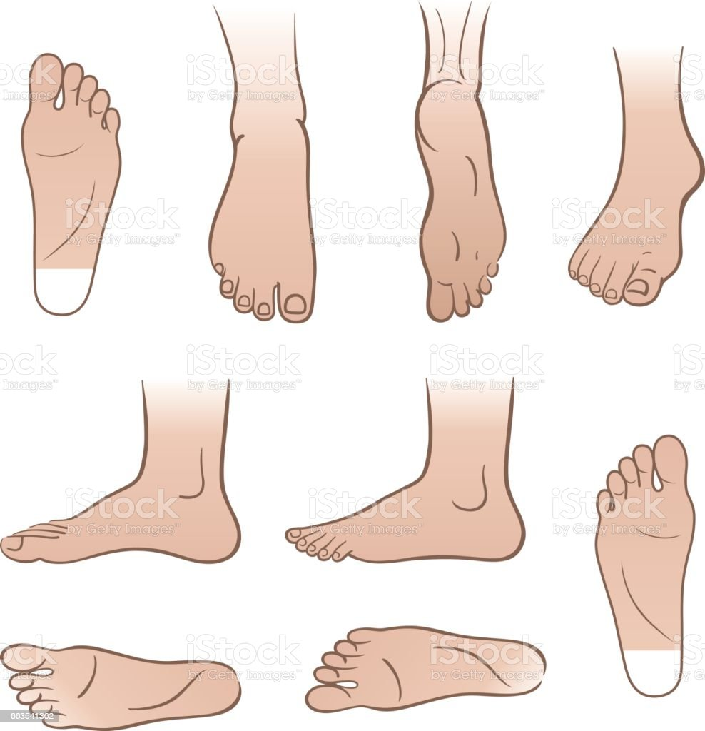 Man Feet Stock Vektor Art und mehr Bilder von Anatomie 663541362 ...