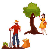 Man harvesting potato and woman picking apples