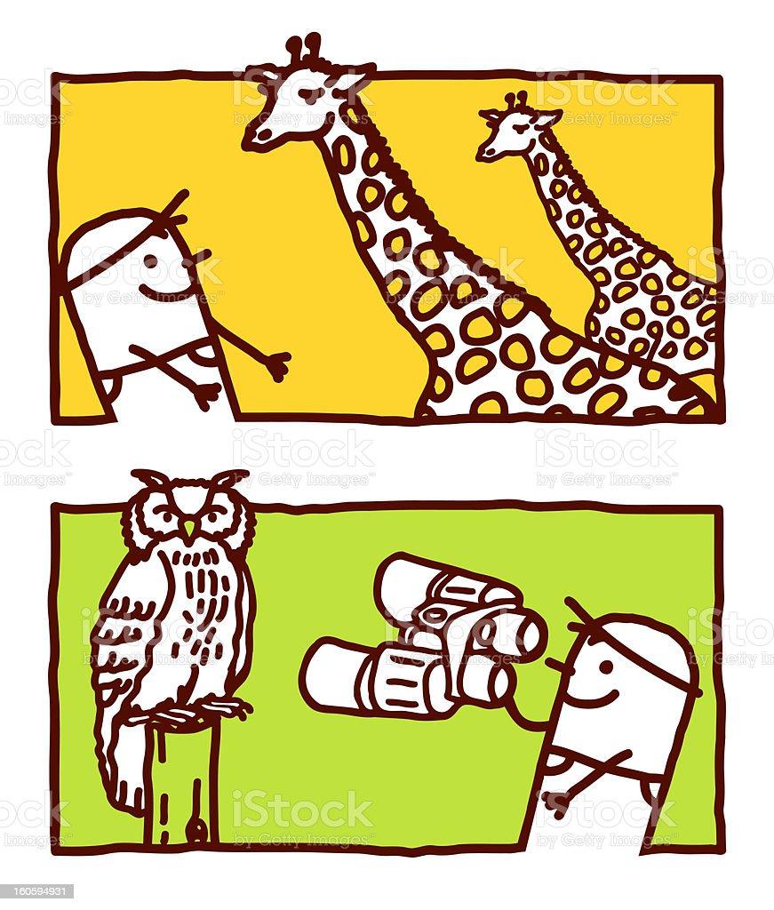 man looking giraffes & owl royalty-free stock vector art