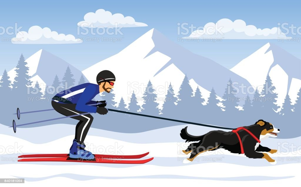 Man Skijoring with his dog bernese in mountains vector art illustration
