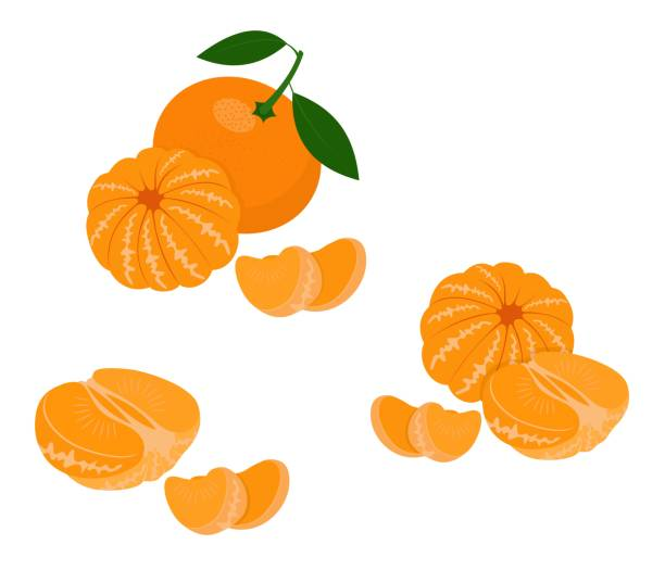 Mandarin, tangerine, clementine with leaves isolated on white background. Citrus fruit. Vector Illustration Mandarin, tangerine, clementine with leaves on white background. Citrus fruit. Vector Illustration tangerine stock illustrations