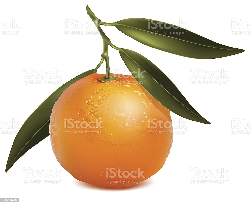 Mandarin with leaves. royalty-free stock vector art